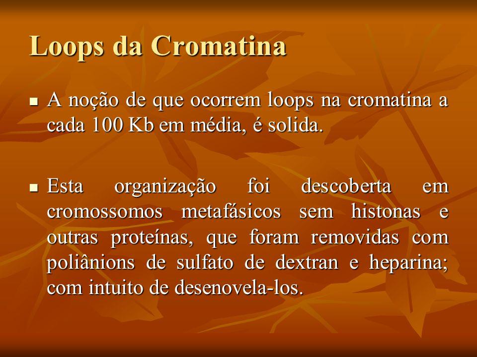 Loops da Cromatina A noção de que ocorrem loops na cromatina a cada 100 Kb em média, é solida.