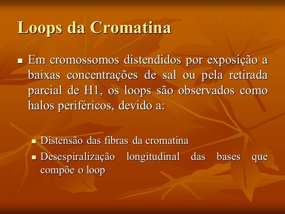 Loops da Cromatina
