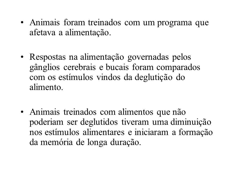 Animais foram treinados com um programa que afetava a alimentação.