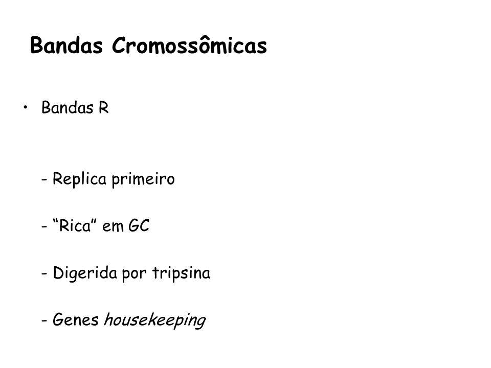Bandas Cromossômicas Bandas R - Replica primeiro - Rica em GC