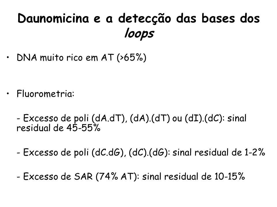 Daunomicina e a detecção das bases dos loops