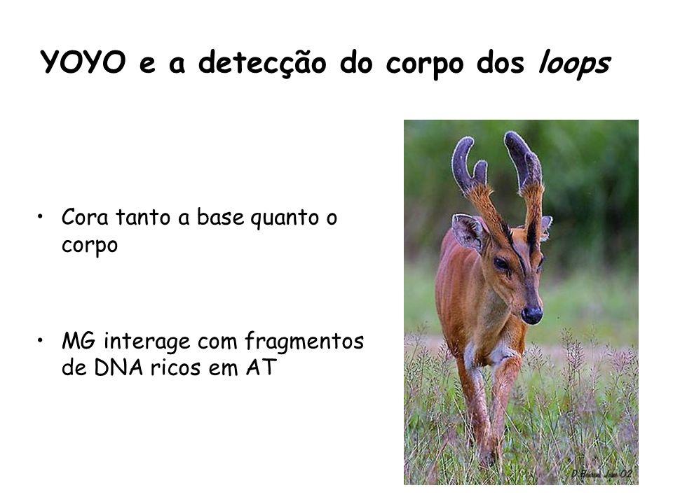 YOYO e a detecção do corpo dos loops