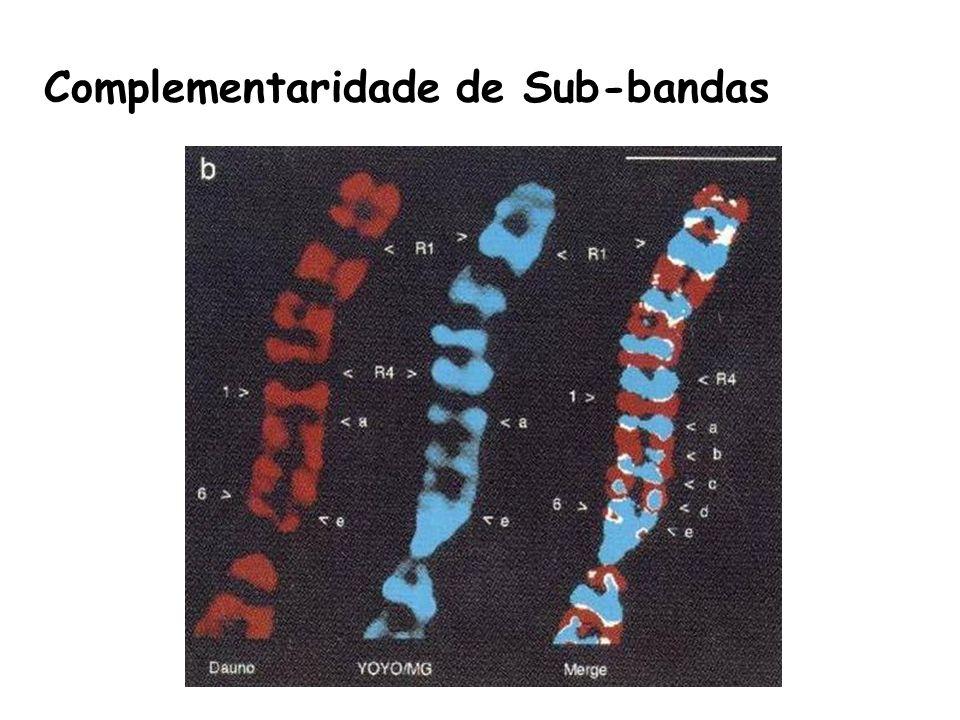 Complementaridade de Sub-bandas