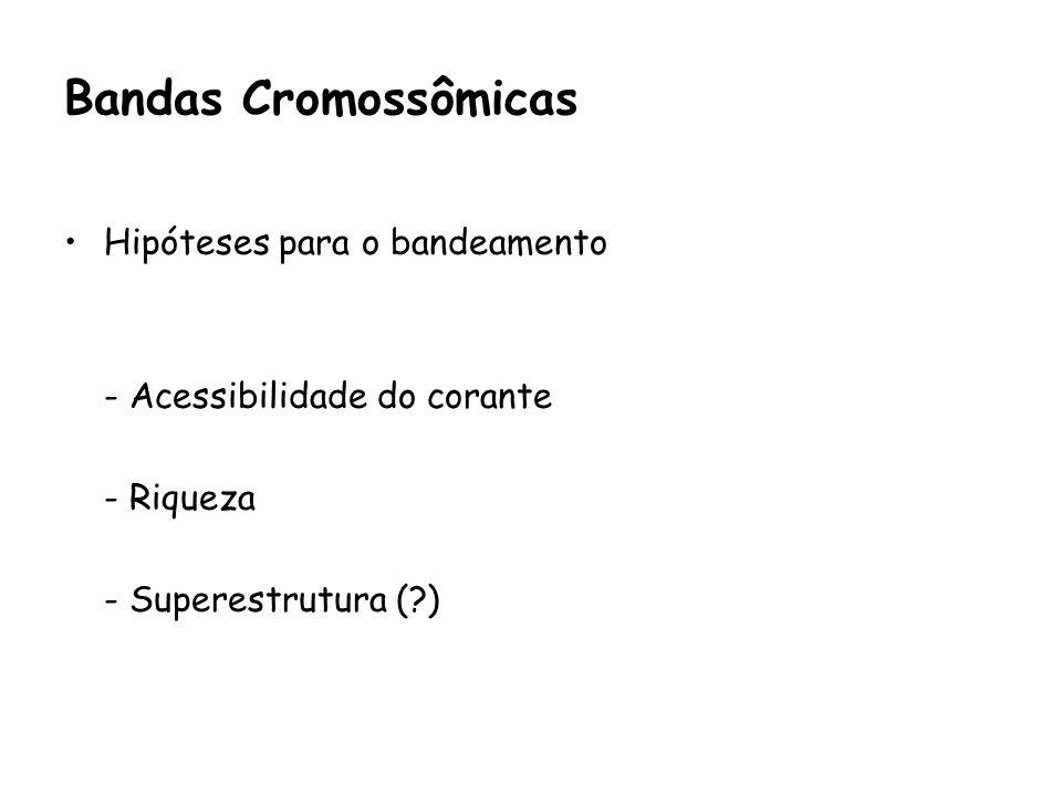 Bandas Cromossômicas Hipóteses para o bandeamento