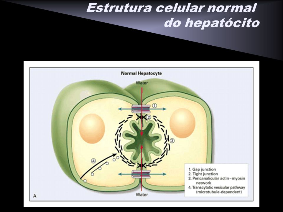 Estrutura celular normal