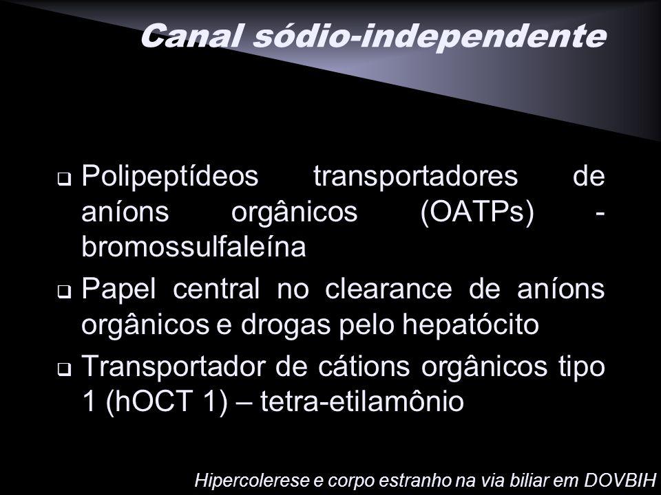 Canal sódio-independente