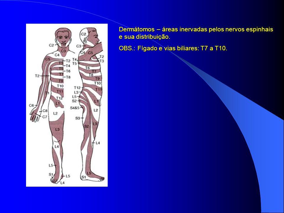Dermátomos – áreas inervadas pelos nervos espinhais e sua distribuição.