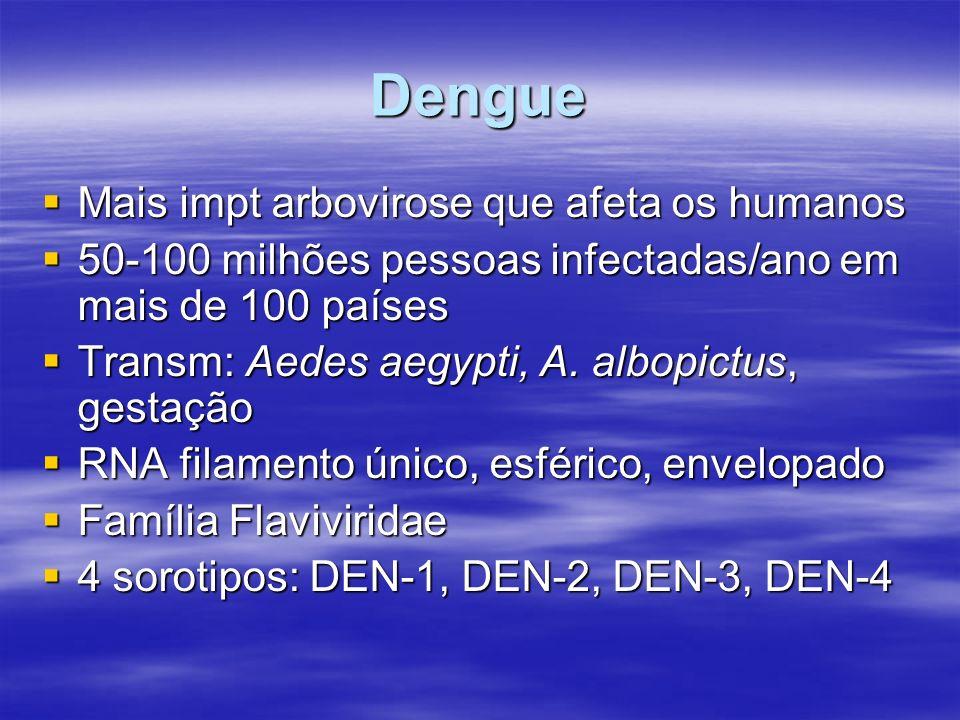 Dengue Mais impt arbovirose que afeta os humanos