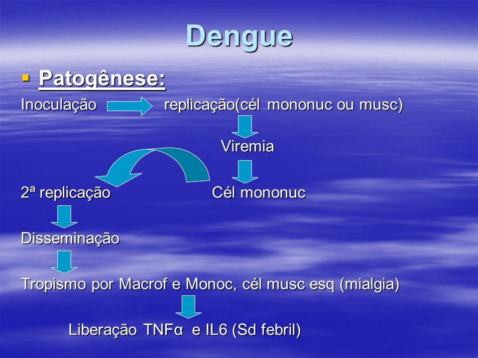 Dengue Patogênese: Inoculação replicação(cél mononuc ou musc) Viremia
