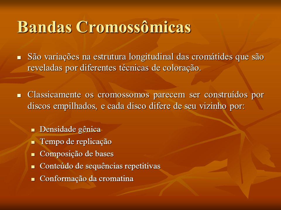 Bandas Cromossômicas São variações na estrutura longitudinal das cromátides que são reveladas por diferentes técnicas de coloração.
