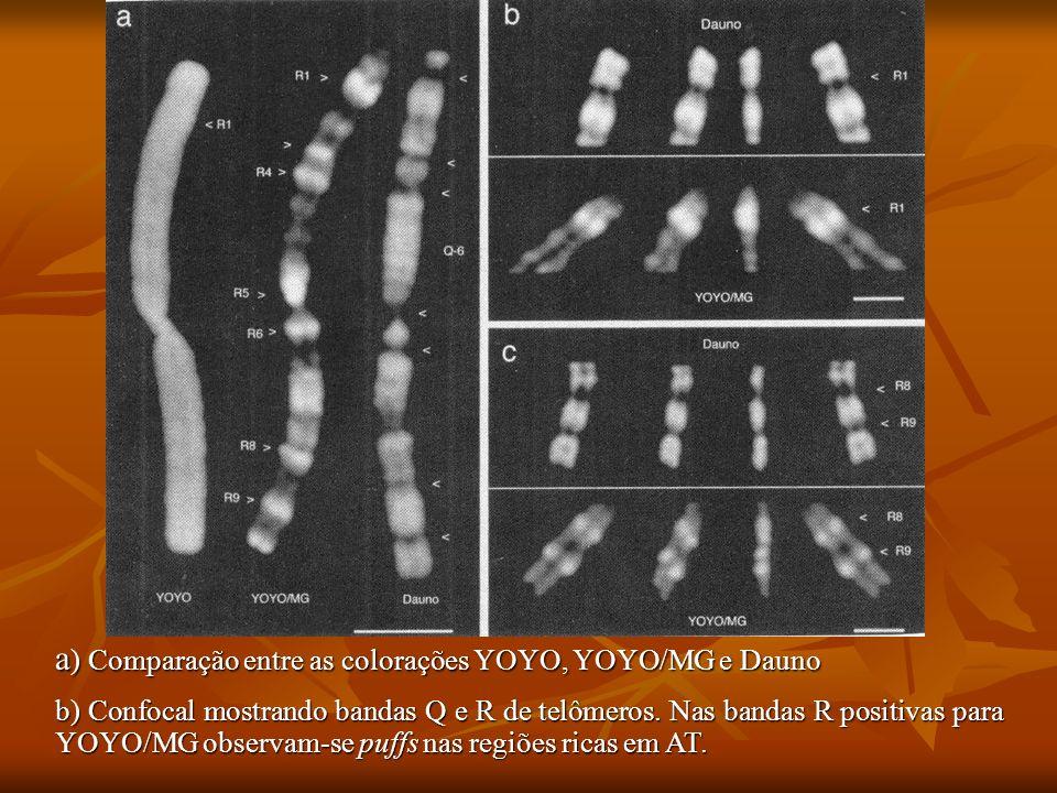 a) Comparação entre as colorações YOYO, YOYO/MG e Dauno