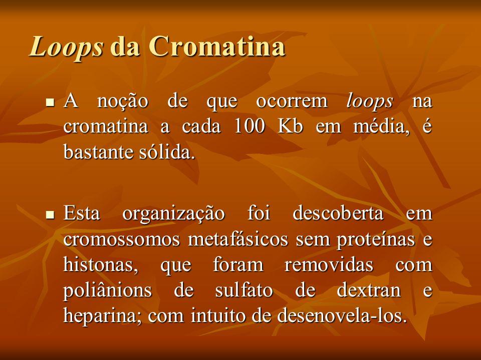 Loops da Cromatina A noção de que ocorrem loops na cromatina a cada 100 Kb em média, é bastante sólida.