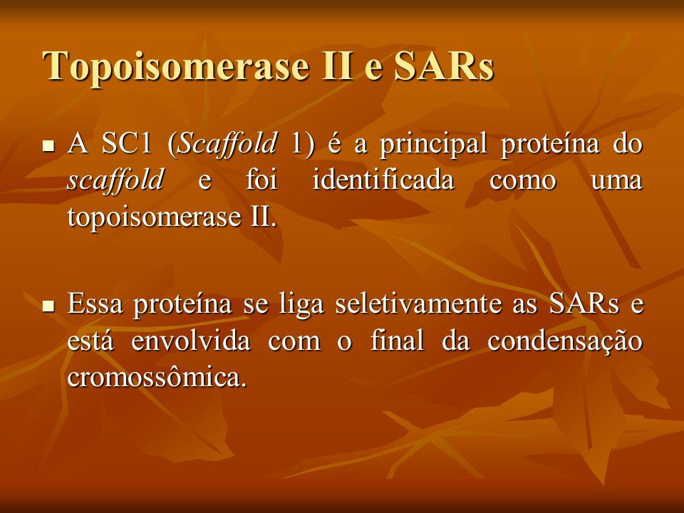 Topoisomerase II e SARs