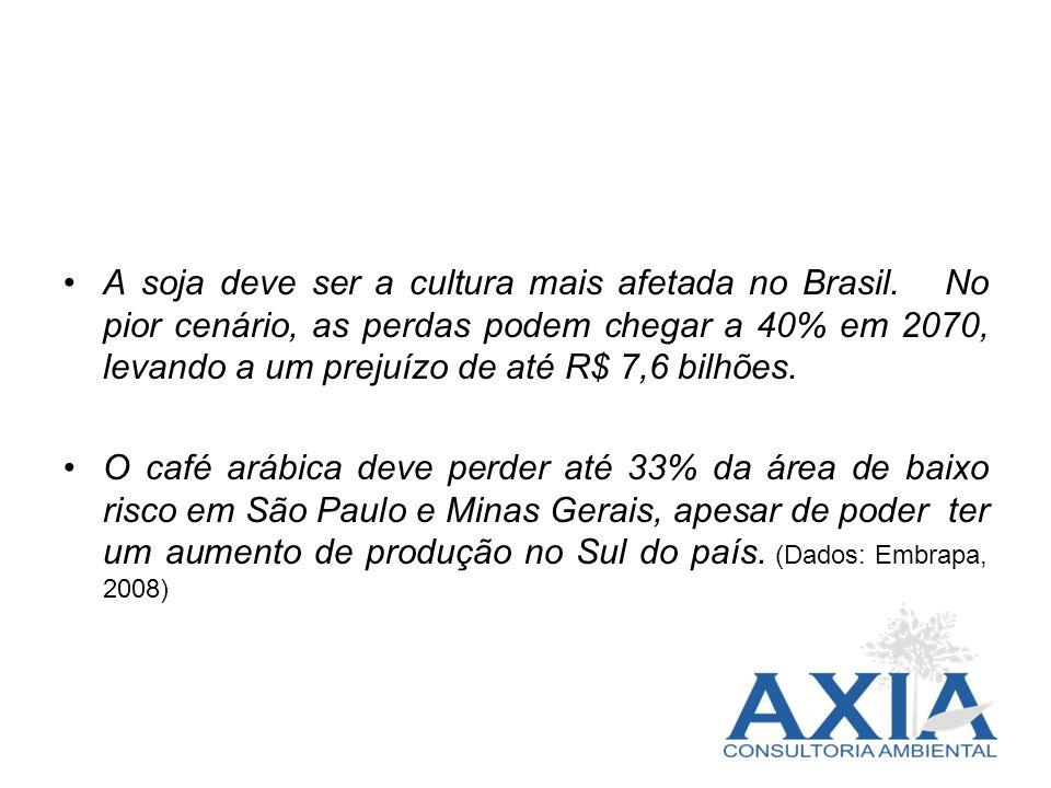 A soja deve ser a cultura mais afetada no Brasil