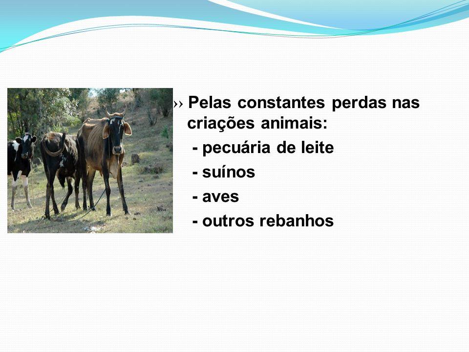 ›› Pelas constantes perdas nas criações animais: - pecuária de leite - suínos - aves - outros rebanhos