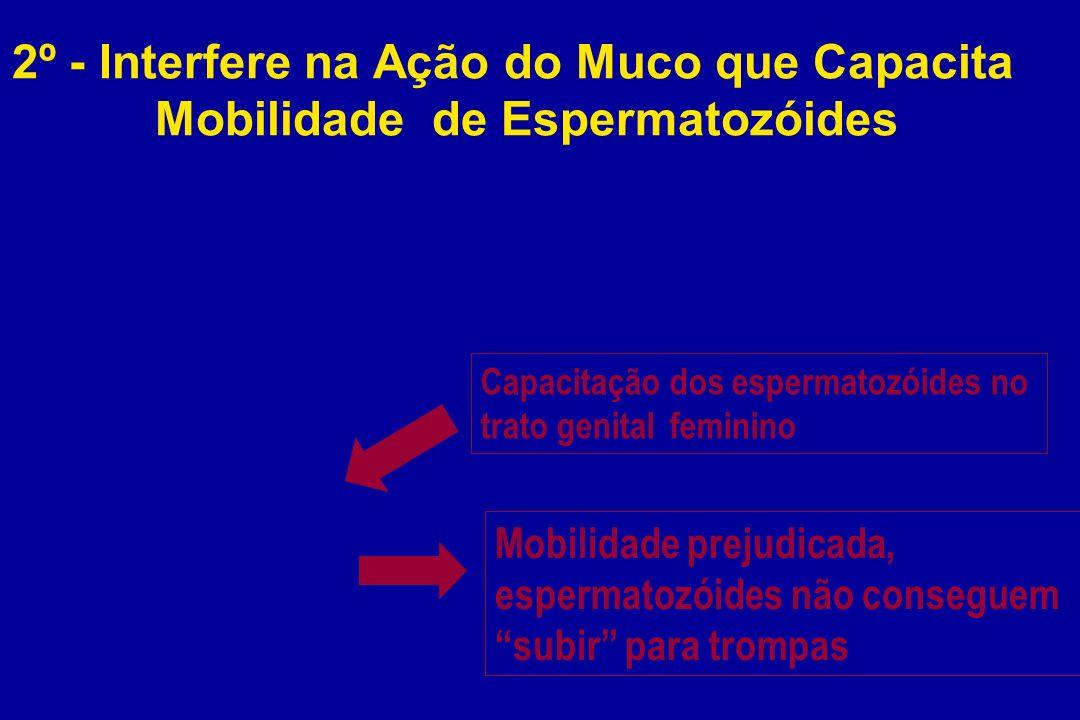 2º - Interfere na Ação do Muco que Capacita Mobilidade de Espermatozóides