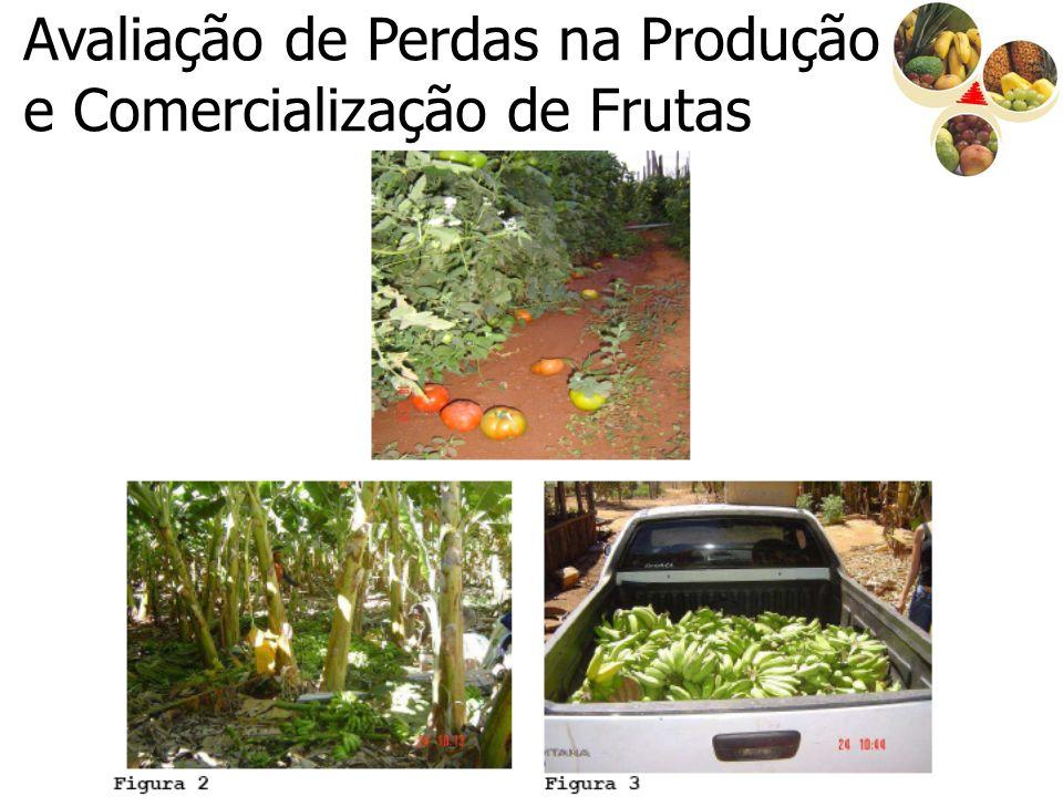 Avaliação de Perdas na Produção e Comercialização de Frutas
