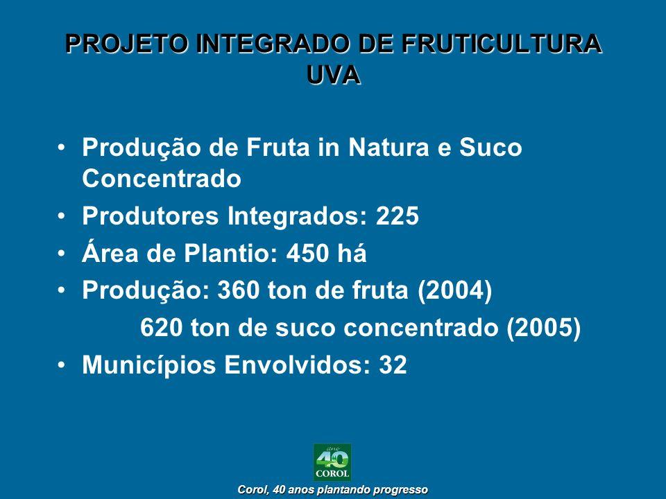 PROJETO INTEGRADO DE FRUTICULTURA UVA