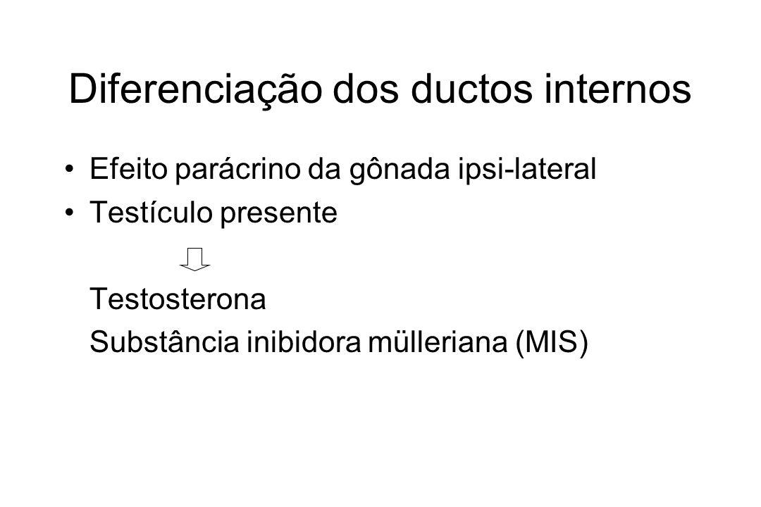 Diferenciação dos ductos internos