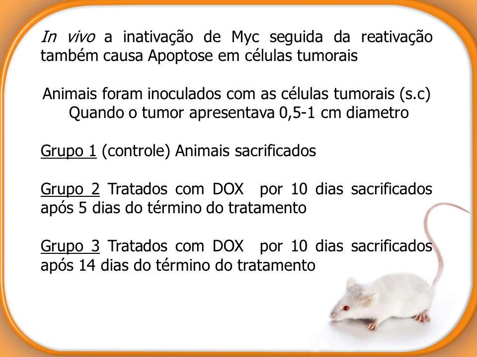 Animais foram inoculados com as células tumorais (s.c)