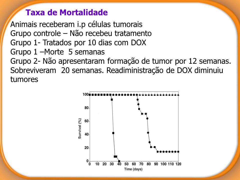 Taxa de Mortalidade
