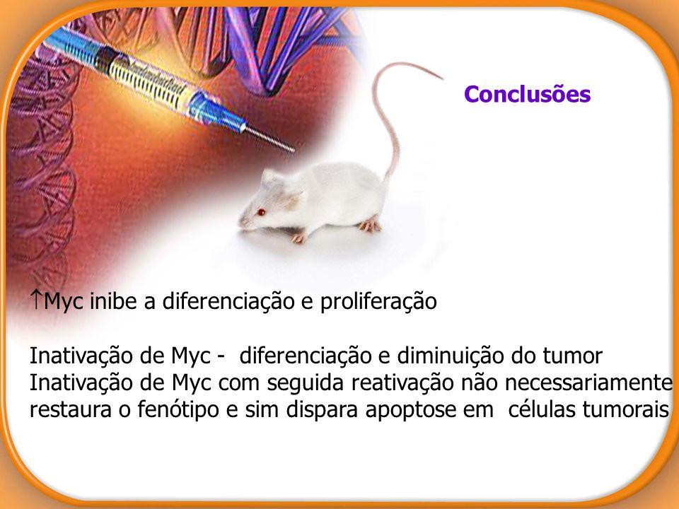 Conclusões Myc inibe a diferenciação e proliferação. Inativação de Myc - diferenciação e diminuição do tumor.