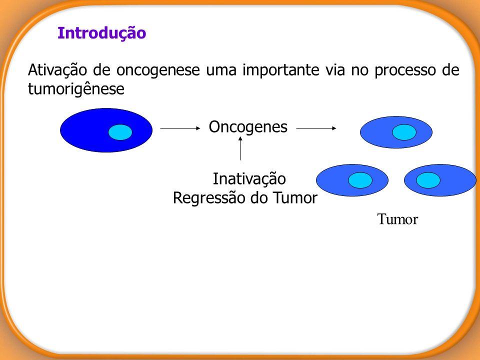 Introdução Ativação de oncogenese uma importante via no processo de tumorigênese. Oncogenes. Inativação.