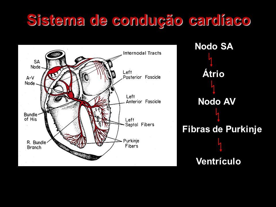 Sistema de condução cardíaco