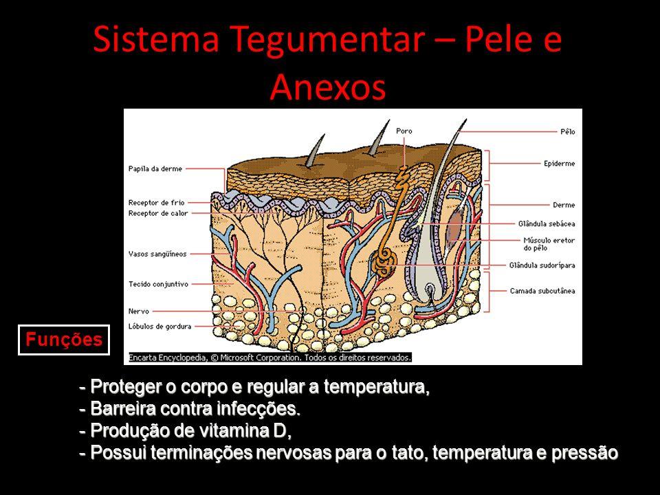 Sistema Tegumentar – Pele e Anexos