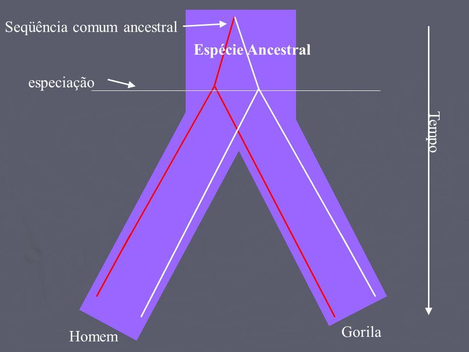 Seqüência comum ancestral