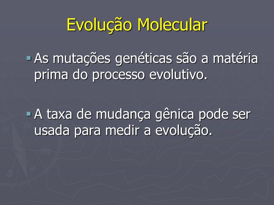 Evolução Molecular As mutações genéticas são a matéria prima do processo evolutivo.