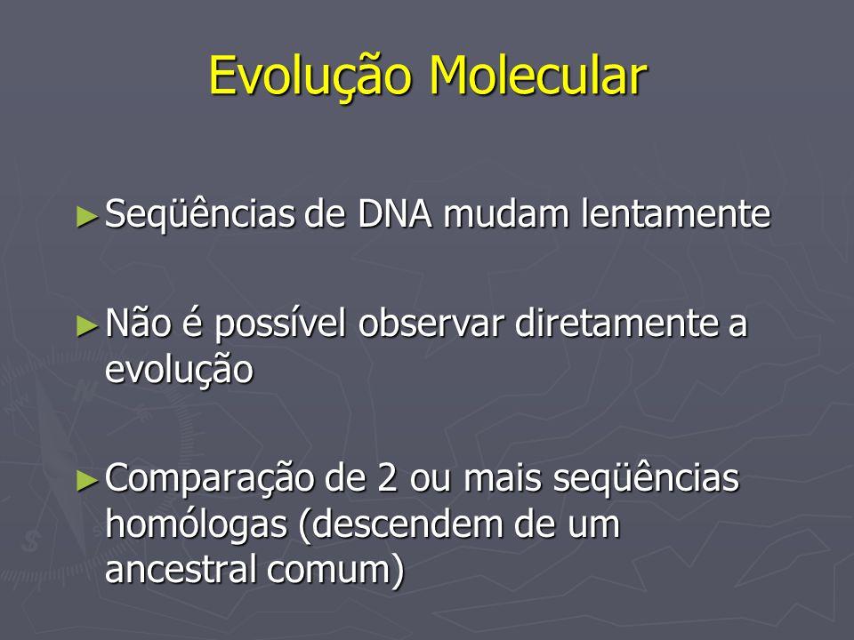 Evolução Molecular Seqüências de DNA mudam lentamente