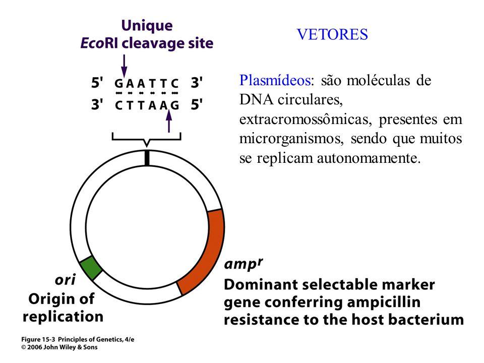 VETORESPlasmídeos: são moléculas de DNA circulares, extracromossômicas, presentes em microrganismos, sendo que muitos se replicam autonomamente.