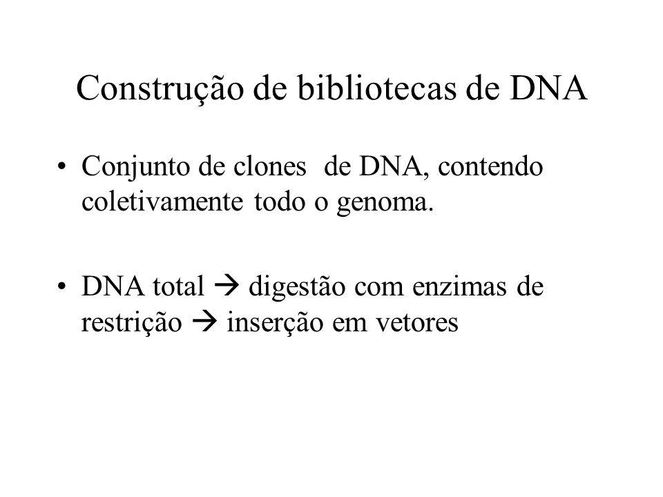 Construção de bibliotecas de DNA