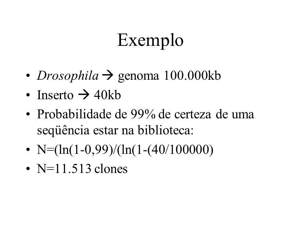 Exemplo Drosophila  genoma 100.000kb Inserto  40kb