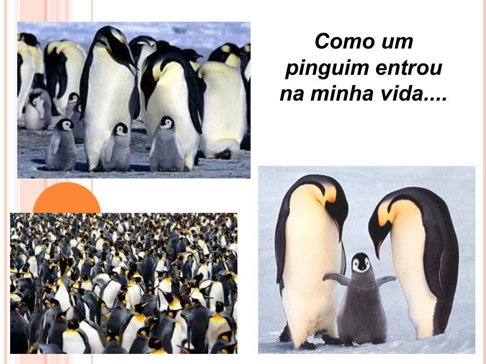 Como um pinguim entrou na minha vida....