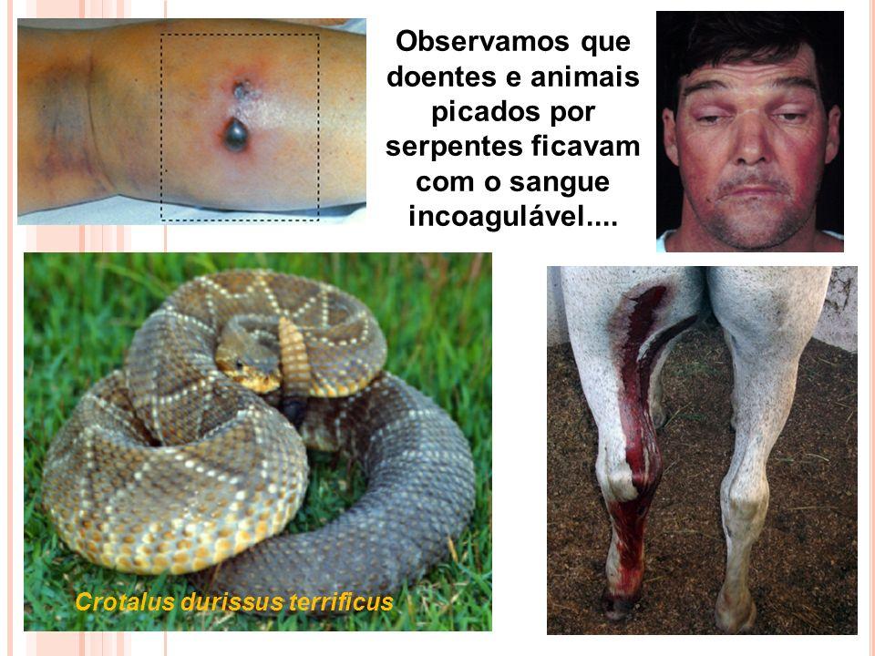 Observamos que doentes e animais picados por serpentes ficavam com o sangue incoagulável....