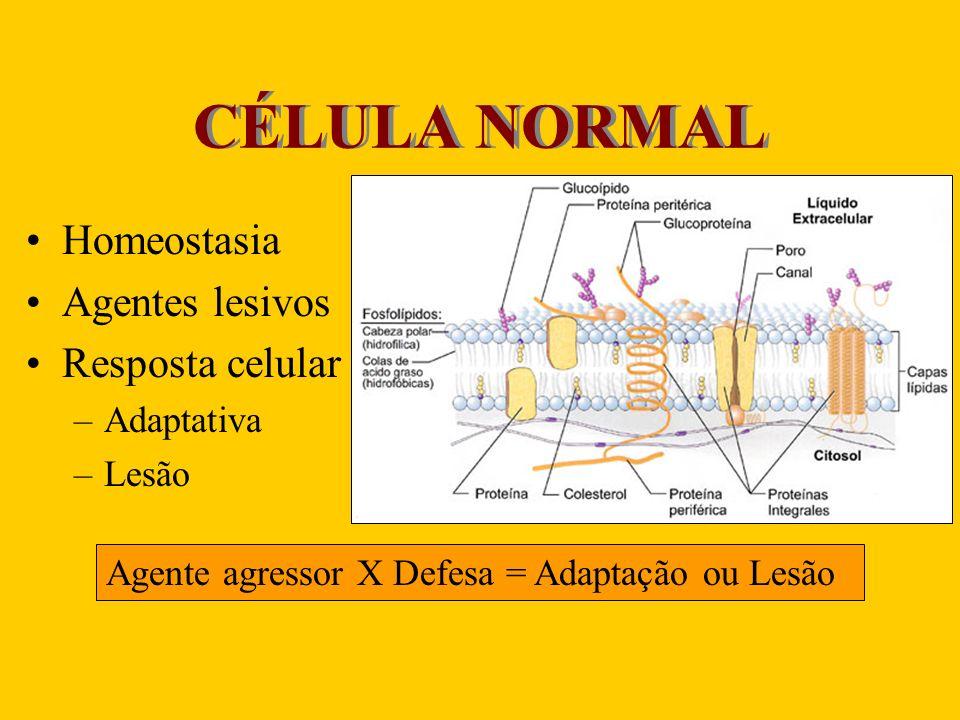 CÉLULA NORMAL Homeostasia Agentes lesivos Resposta celular Adaptativa