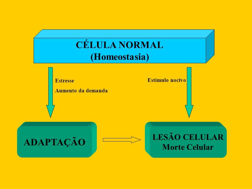 CÉLULA NORMAL (Homeostasia) ADAPTAÇÃO