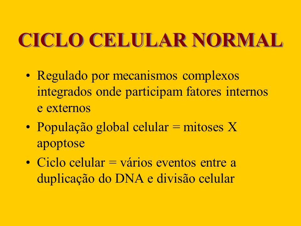 CICLO CELULAR NORMAL Regulado por mecanismos complexos integrados onde participam fatores internos e externos.