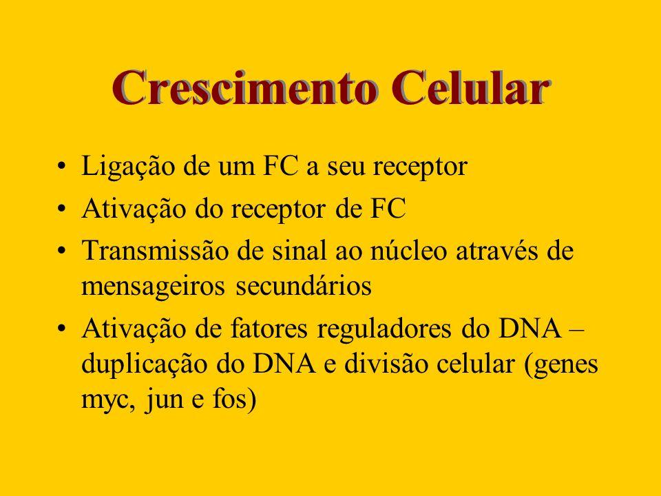 Crescimento Celular Ligação de um FC a seu receptor