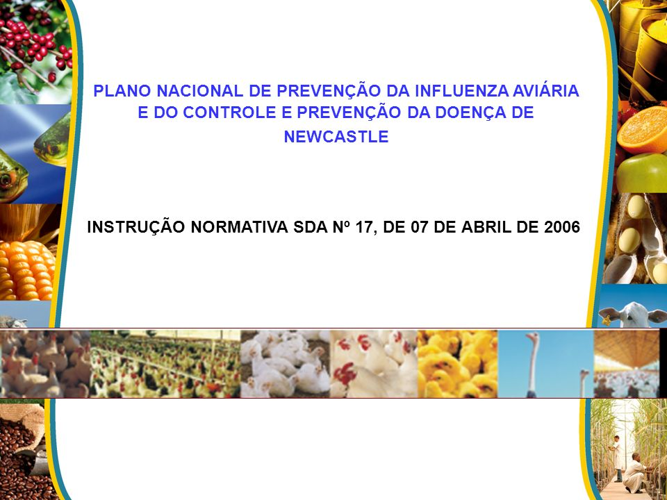 INSTRUÇÃO NORMATIVA SDA Nº 17, DE 07 DE ABRIL DE 2006