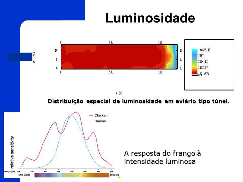 Distribuição especial de luminosidade em aviário tipo túnel.