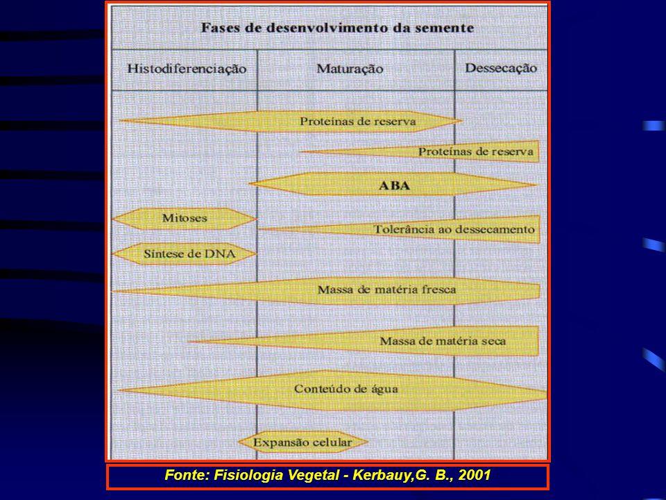 Fonte: Fisiologia Vegetal - Kerbauy,G. B., 2001