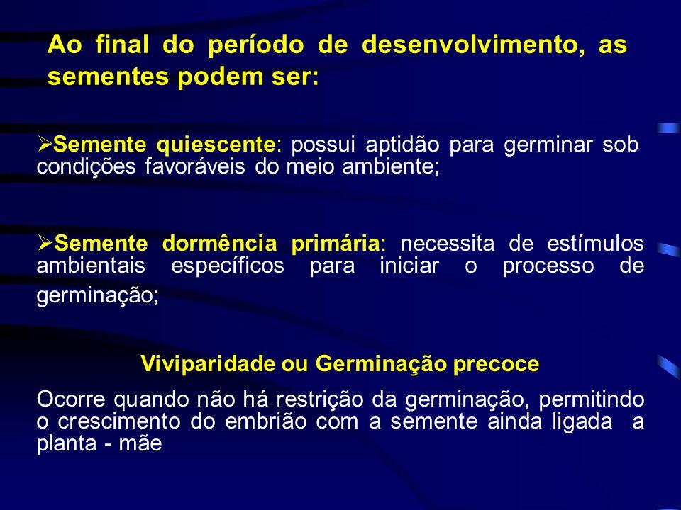 Viviparidade ou Germinação precoce