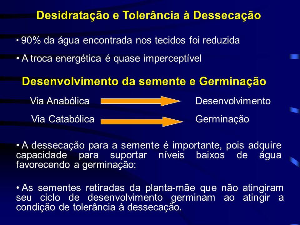 Desidratação e Tolerância à Dessecação