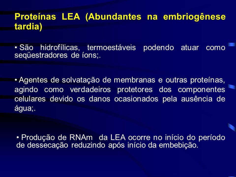 Proteínas LEA (Abundantes na embriogênese tardia)