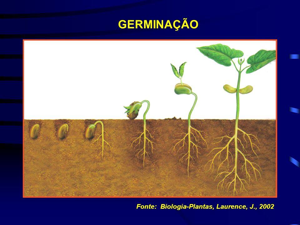 GERMINAÇÃO Fonte: Biologia-Plantas, Laurence, J., 2002
