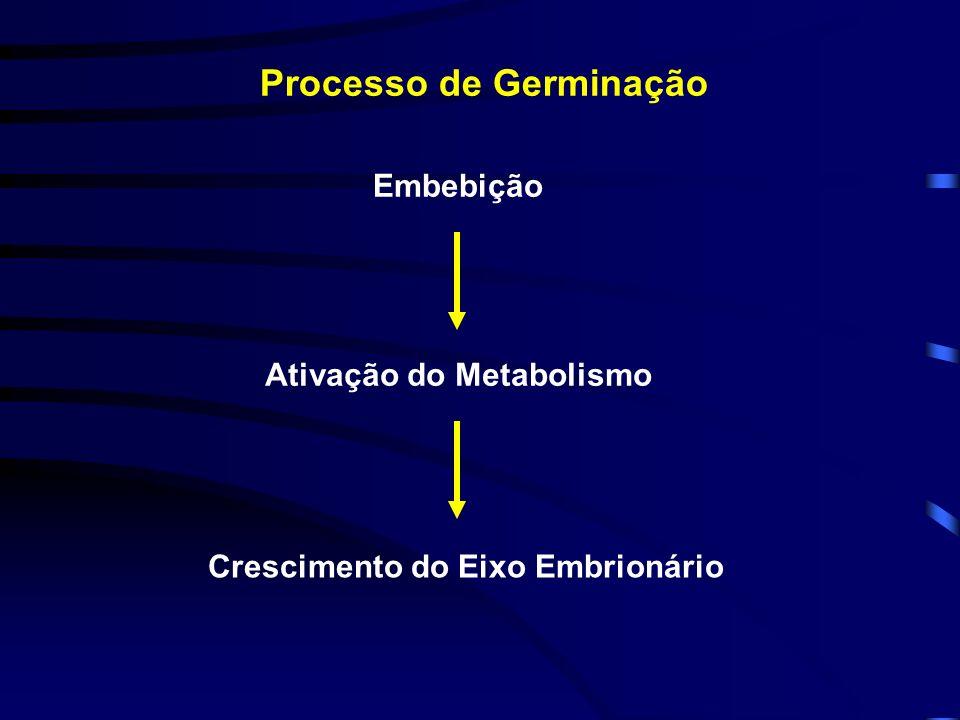 Processo de Germinação
