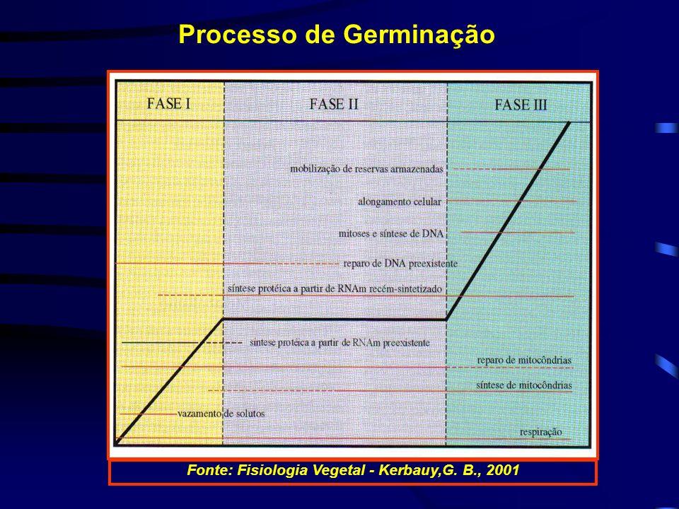Processo de Germinação Fonte: Fisiologia Vegetal - Kerbauy,G. B., 2001